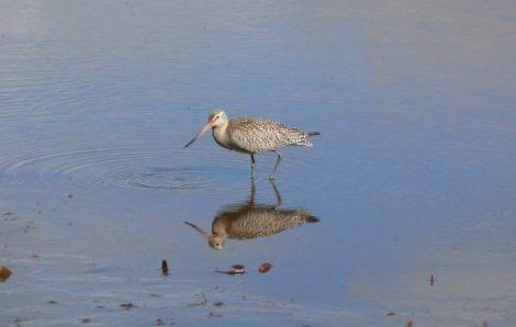 Birds of North Stradbroke Island