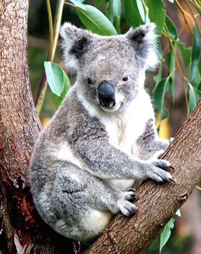 Koala Point Lookout (1)